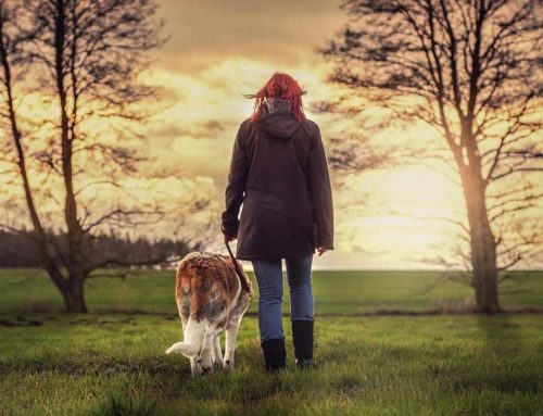 The Mental Benefits of Walking Your Dog