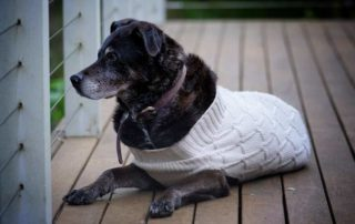 6 tips for potty training an older dog