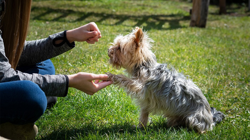 four big tips for training a difficult dog