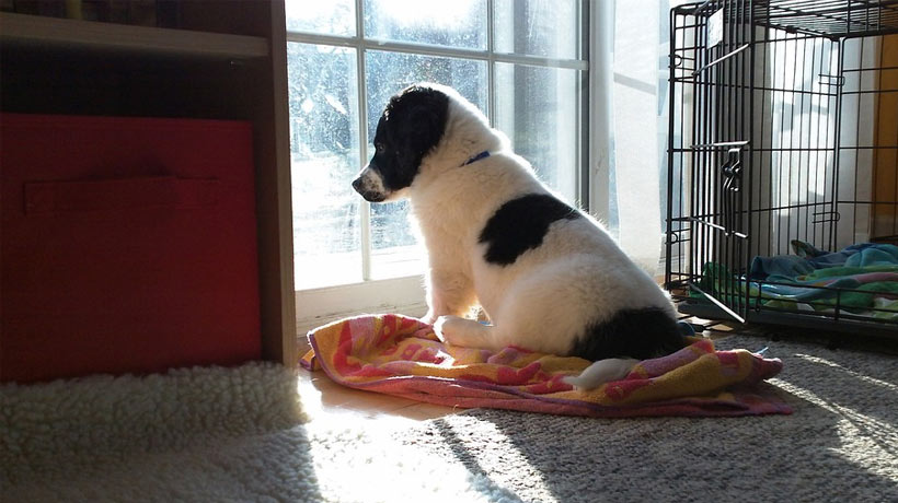 cold weather safety for dogs in California