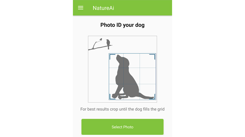 Dog Breed Scanner App
