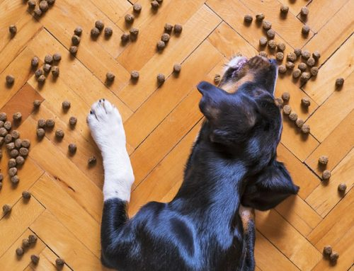 8 Ingredients in Dog Food that Can Cause Health Problems