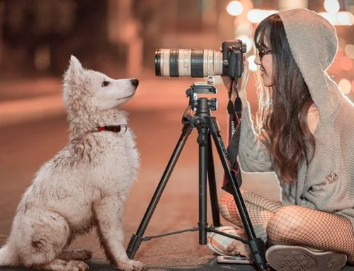 4 Tricks for Taking Better Photos of Your Dog