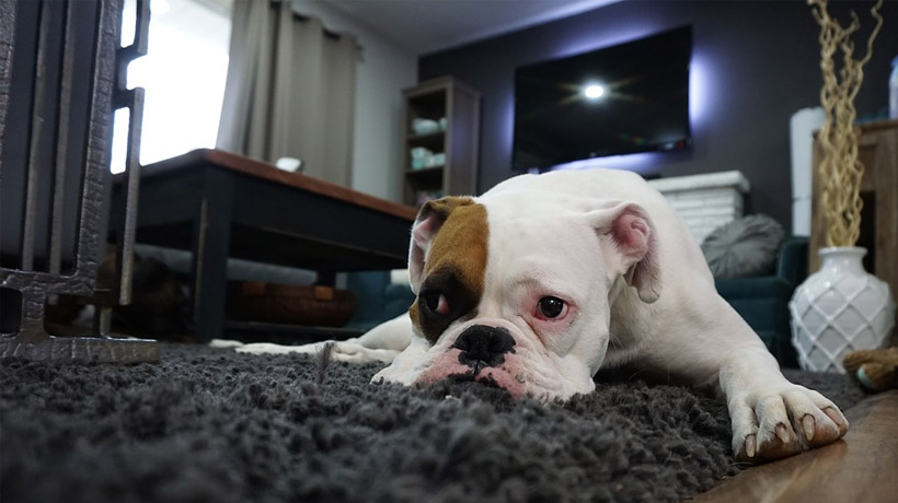 most common causes of diarrhea in dogs