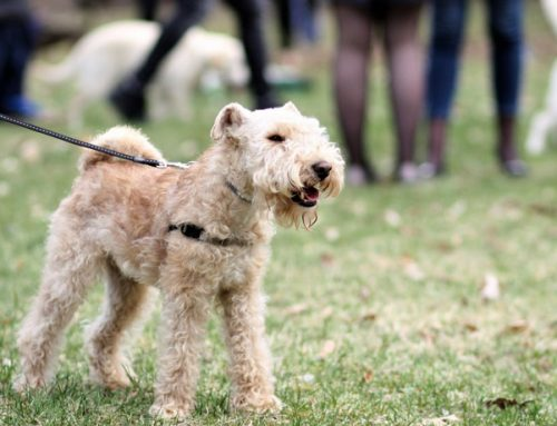 How to Plan and Build a Dog Park in your Community